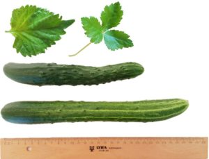Japanische Kräuter und Gemüse in Deutschland