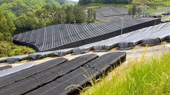 Abgeschattete Teesträucher für Tencha in Uji, Kyoto