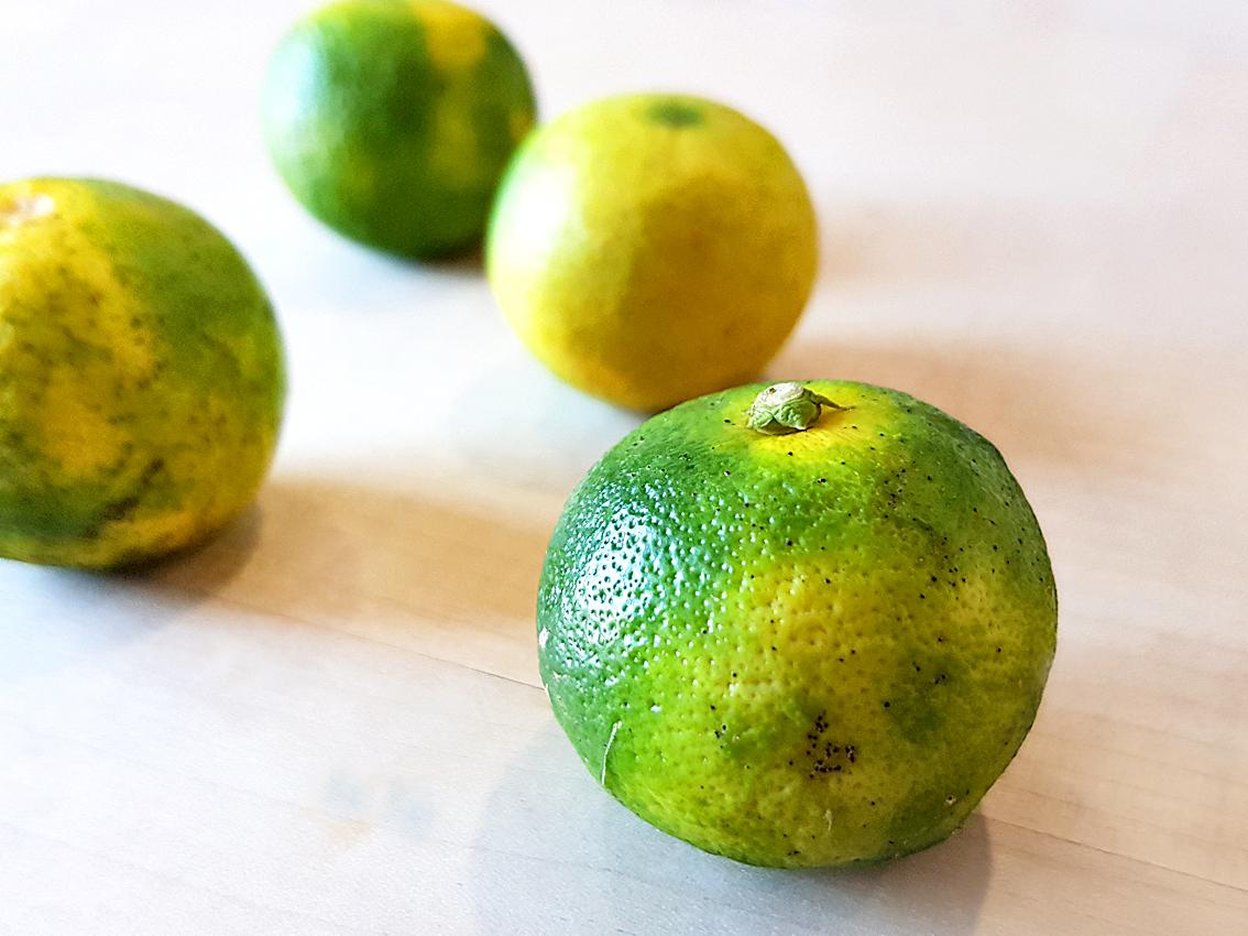 Die japanische Zitrusfrucht Sudachi – was macht man damit?