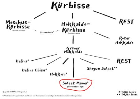 Taxonomie der Kabocha-Kürbisse