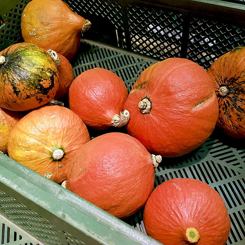 Roter Hokkaido in einem Supermarkt
